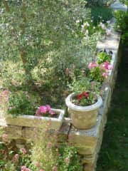 the terrace and yard