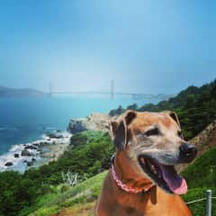 Ms. Bea was such a love on our Trusted Housesitters sit in San Francisco. Yay for Doggy Walks!