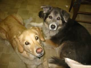 2 of my previous pets, husky mix, rescues