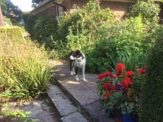 Benji in the garden