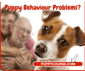 The online Puppy Training course Anthony wrote and  published to guide new pet owners
