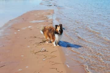 Amber who passed away a few years ago at the age of 11. She loved the beach!