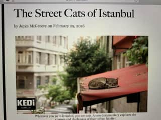 My article about the special place cats hold in the hearts of the Turkish people