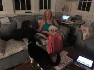 Our latest housesit with Lily Cupcake and Mo!
