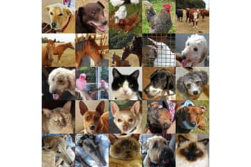 All of our pets - Australia and New Zealand 2018