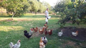 Hildegunn calling the chickens into their coop for the evening