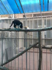 Phu and Ozzy trying out the catio