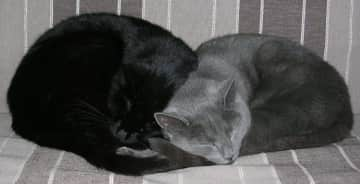 CHOKLATJE and RAFTJE : my 2 catbrothers, R.I.P., I miss them so much