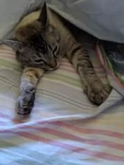 Samuel, the cat