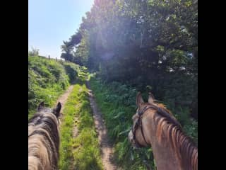 Out hacking around our home on Magpie and Neil