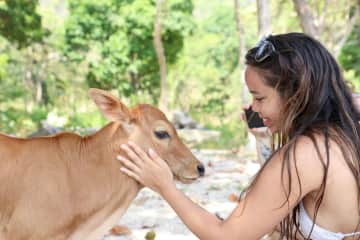 Meeting local cows in Thailand
