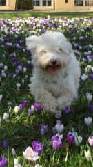Benno running in nearby park flowers.
