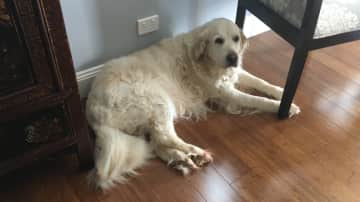 Dog at house sit