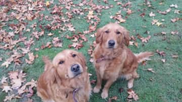 Daisy (Left) and Indie (Right)