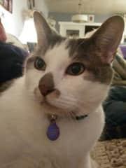 Carson, our big handsome boy