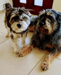 Chewy and Athena from Mexico