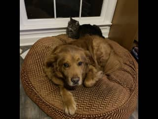 He likes Tennessee when she's not stealing his bed.