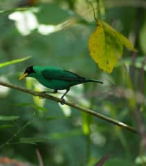 A bird in my backyard in Costa Rica