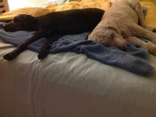 Homer and Hazel, Florida pet sit.