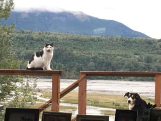 Stray cat MJ and neighbor's dog Angel hanging on my deck