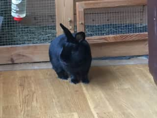 Archie Rabbit