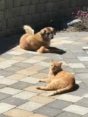 Jaynie & Simba lounging outside