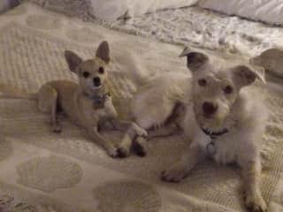 Costa Rica pups!