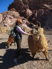 Margaret petting wooly alpacas near to where she was WWOOF'ing on a dairy-farm (Puno, Peru - June 2013).