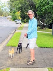 Steve walking Tara & Bella (house sit dogs)