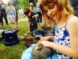Kathryn loving a chicken at John Jay Homestead, NY