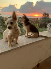 Dolly and Elfi at sunset