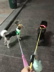 Walking my 2 friend's pups at night in China. Sybil and Kenna were best friends!