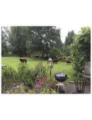 Surprise! Flock of sheep in the garden