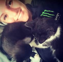 My foster kittens