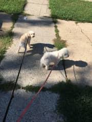enjoying a stroll