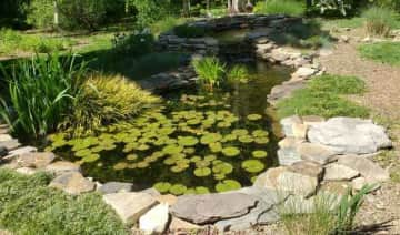 """This is our pond.  The fish are very friendly - they all """"come running"""" when you go out to feed them and they love it if you put your hand in the water and play with them."""