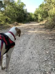 Long country walks with Chippie