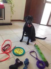 Amora's toys