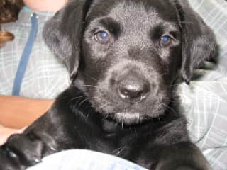 Libby as a puppy