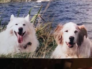 Spencer (left) Frankie (right)