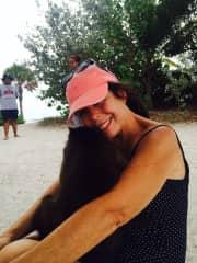 Monkey sitting in Key West