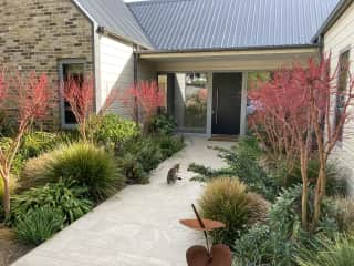 Front entrance to house with cat