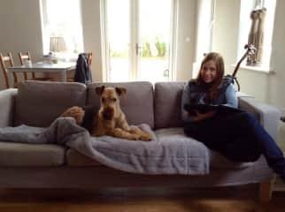 Gradus the airedale terrier in Ireland