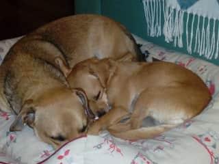 tenants dogs Bailey and Kiara