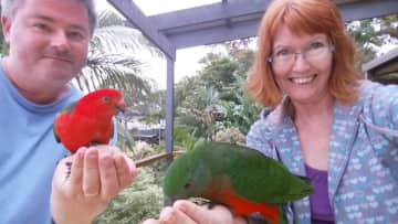 Feeding a pair of wild king parrots at our former house