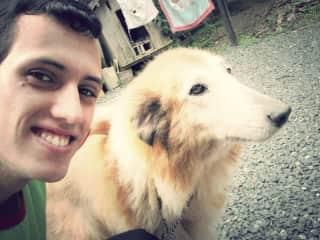Lassie, my deceased collie (miss you)