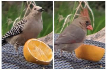 Feeding the Birds in Carmen, AZ.
