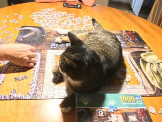 Boots participating in the puzzle