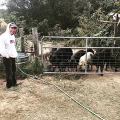 Bill feeding the pigs on our farm sit
