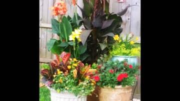 Love gardening! This is my backyard!